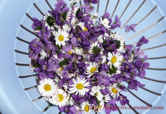 violette et paquerette
