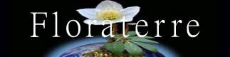 Floraterre, fleurs sauvages et de montagne, médecine naturelle